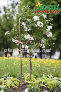 stakes in garden for flowers support