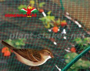 bird and pigeon net