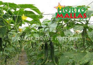 trellis netting in a crop field